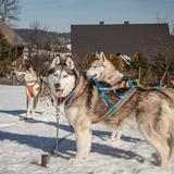 Image: Rocking dogs - dog sledding and dogotherapy in Podwilk